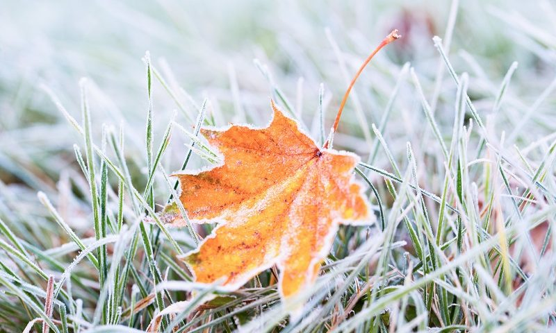 How Winterization Services for Your Sprinklers Can Save You Money in the Spring